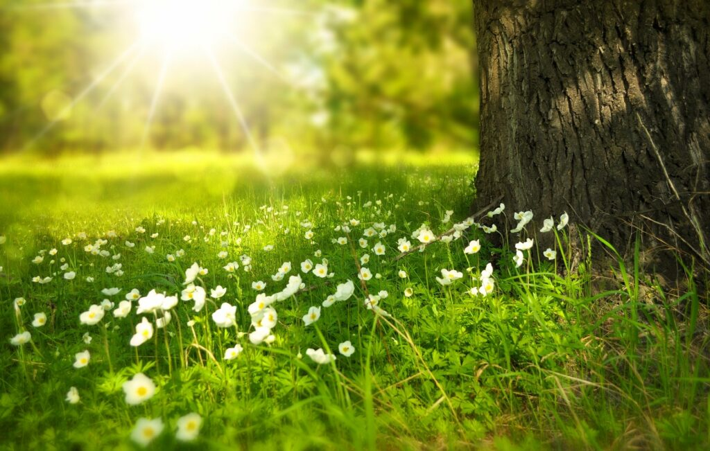 Enjoy Summer Energy Savings with Solar!